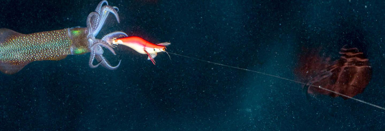Pesca noturna em Dhiffushi