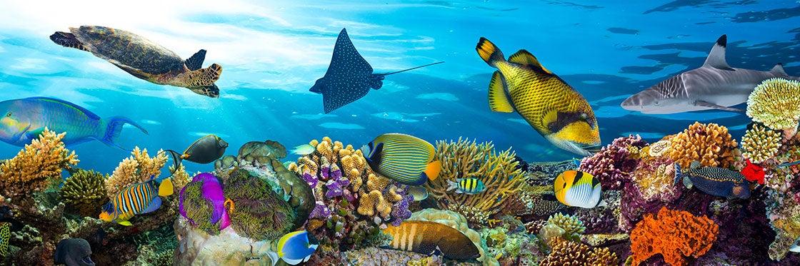 Flora e fauna das Maldivas