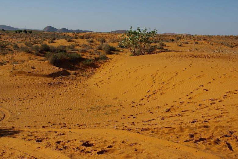,Excursión a Desierto de Massa