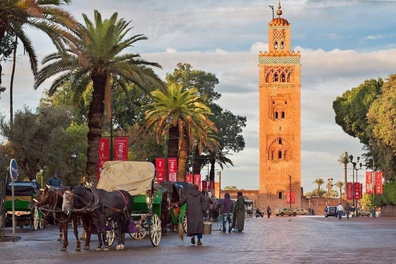 ,Paseo en calesa,Palmeral de Marrakech