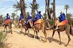 Giro in cammello per il palmeto