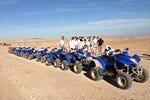 Desert and Palm Grove Quad Bike Tour