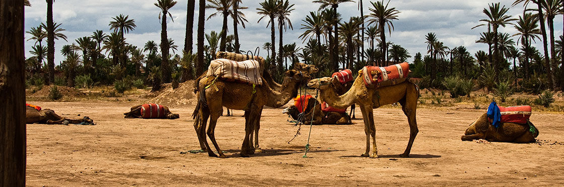 Camel Riding in Marrakech