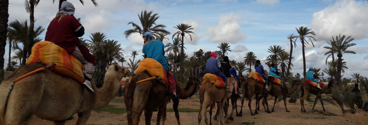 Palm Grove Quad Biking and Camel Riding Tour
