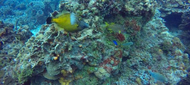Passeio de catamarã por Cozumel + Snorkel