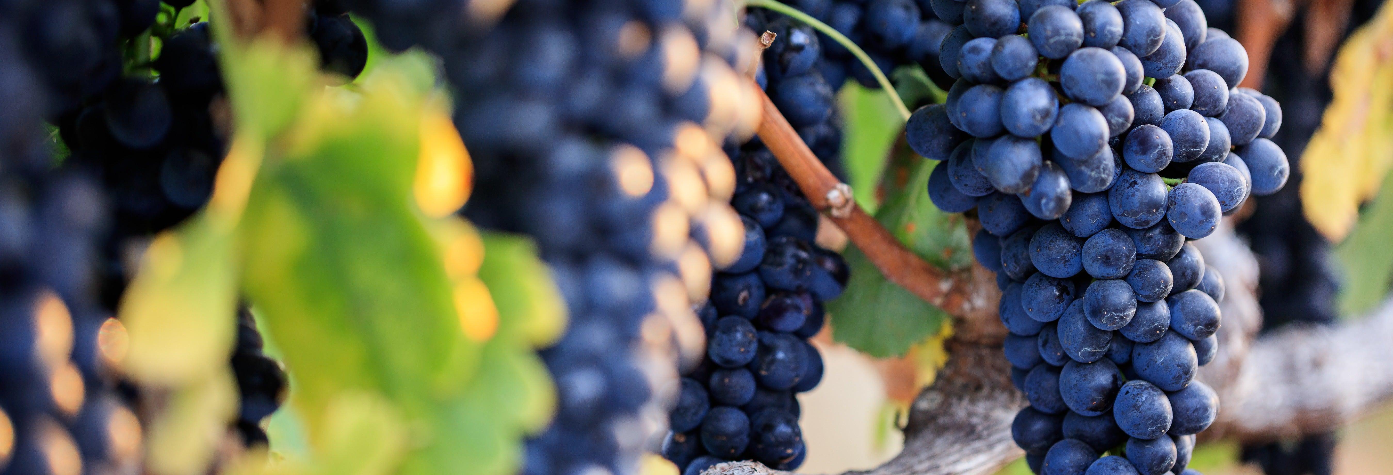 Tour del vino por Guanajuato