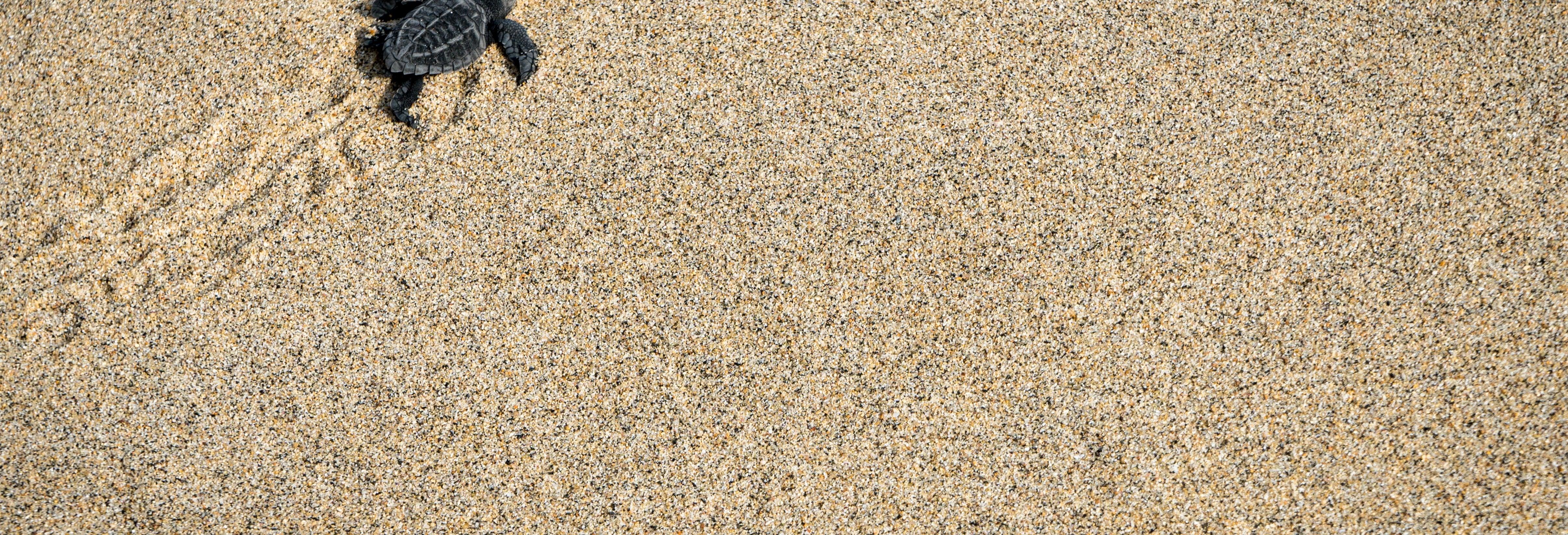 Puerto Escondido Turtle Release