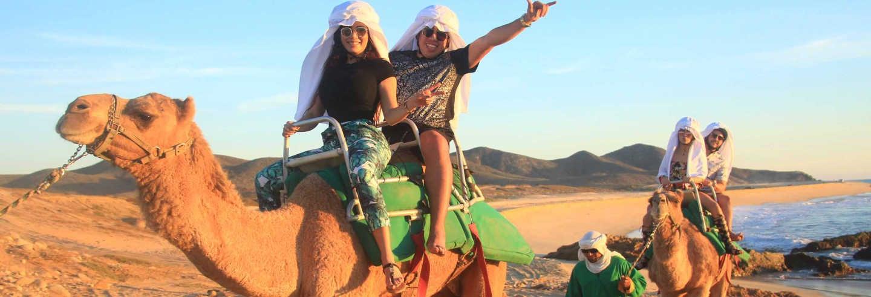Camel Ride in the Los Cabos Desert
