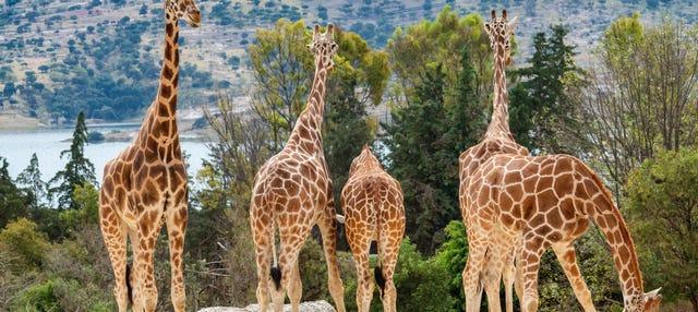 Excursión al Zoológico Africam Safari
