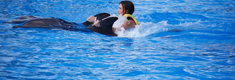 Nado con delfines en Parque Aquaventuras