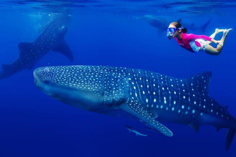,Nadar con delfines,Excursión a Isla Mujeres