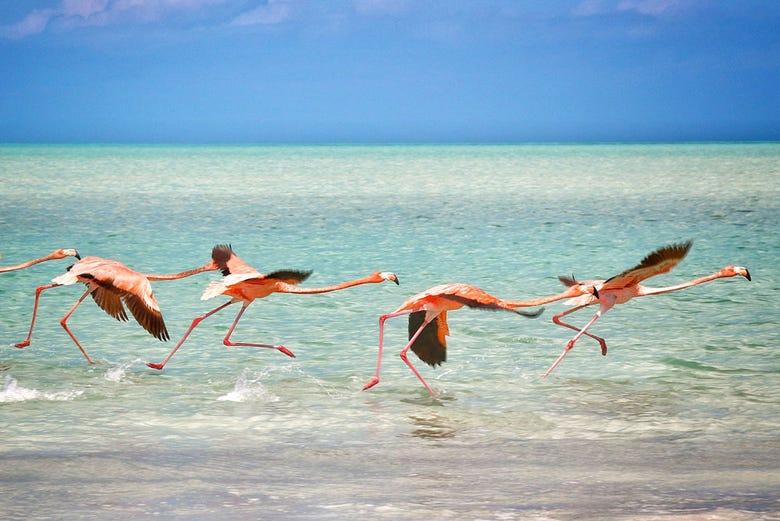 Day Trip to Isla Holbox from Riviera Maya - Book at Civitatis.com