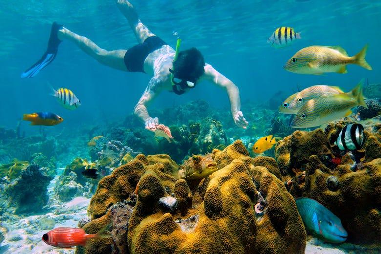 Resultado de imagen de snorkel en la playa del carmen