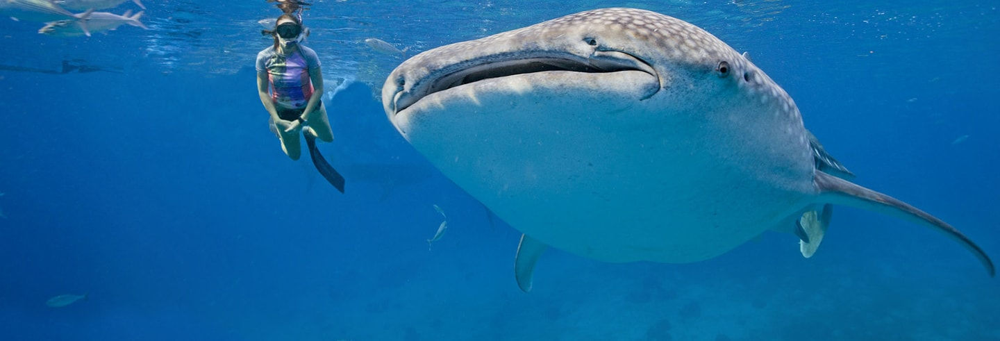 Isla Mujeres + Swimming with Whale Sharks Experience