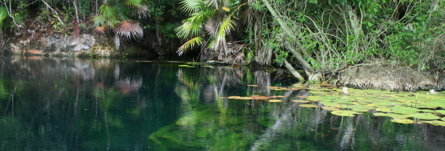 Riviera Maya Cenotes Full-Day Tour