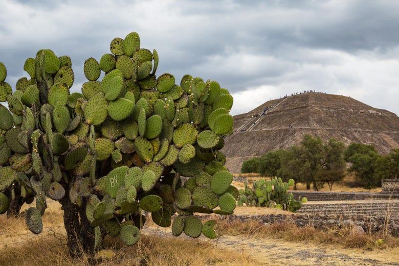 Visite complète de Teotihuacán à vélo