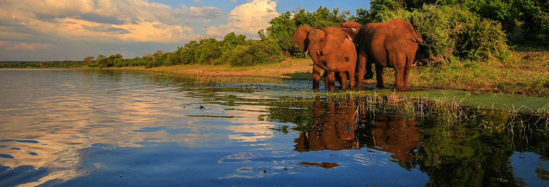 Safari por el Parque Nacional Kruger
