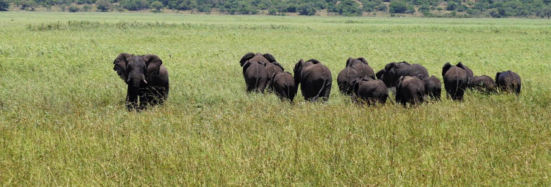 Safari por la Reserva Especial de Maputo