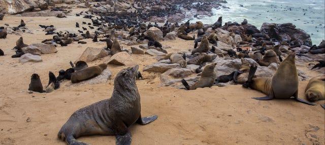 Reserva de leones marinos de Cape Cross