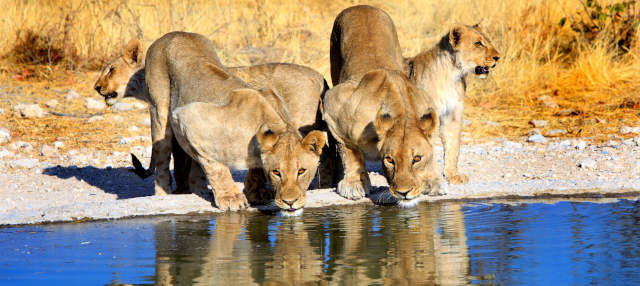 Safari de 8 días por lo mejor de Namibia
