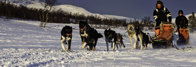 Conducción de trineo de perros husky