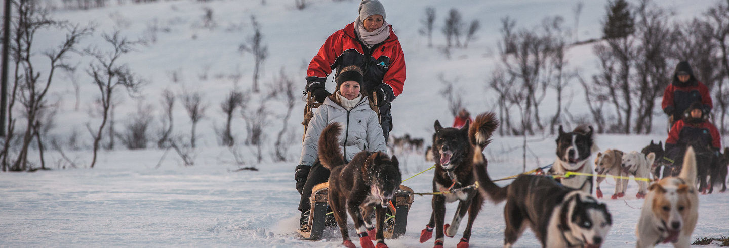 Husky Sled Ride from Tromso