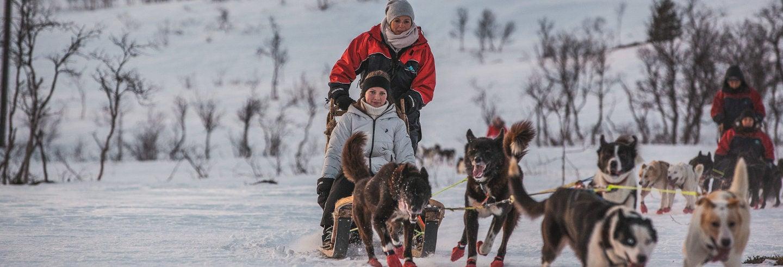 Giro in slitta con cani husky