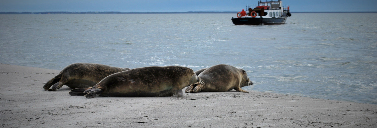 Wadden Sea Cruise and Seal Safari