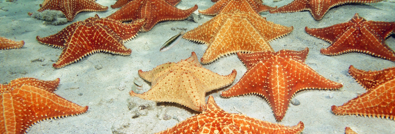 Excursion à Playa Estrella et Isla Pájaros