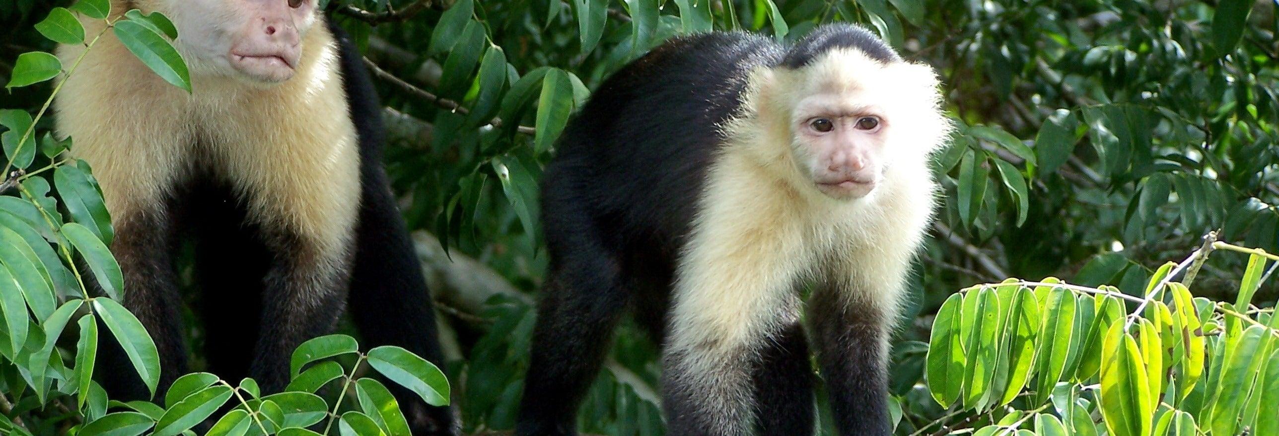 Excursión a Isla Monos y Gamboa Rainforest Resort