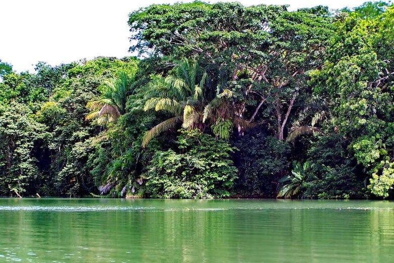 ,Excursión a Selva Gamboa