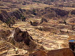 ,Excursión a Cañón del Colca,Tour por Arequipa,Sin alojamiento incluido