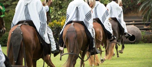 Exhibición de caballos peruanos de paso