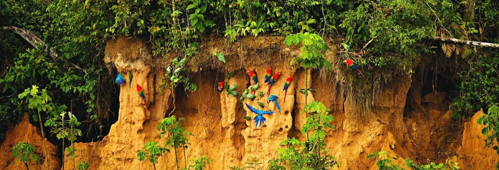 Tour de 7 días por Tambopata