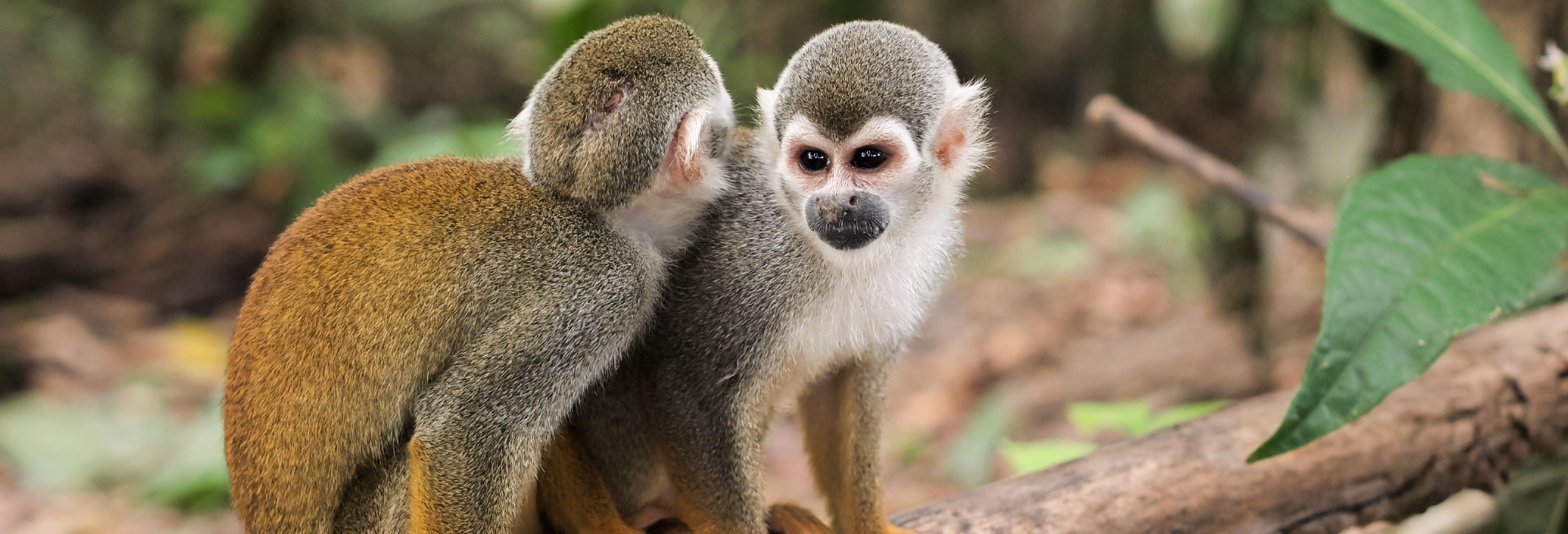 Tour en kayak + Isla de los Monos