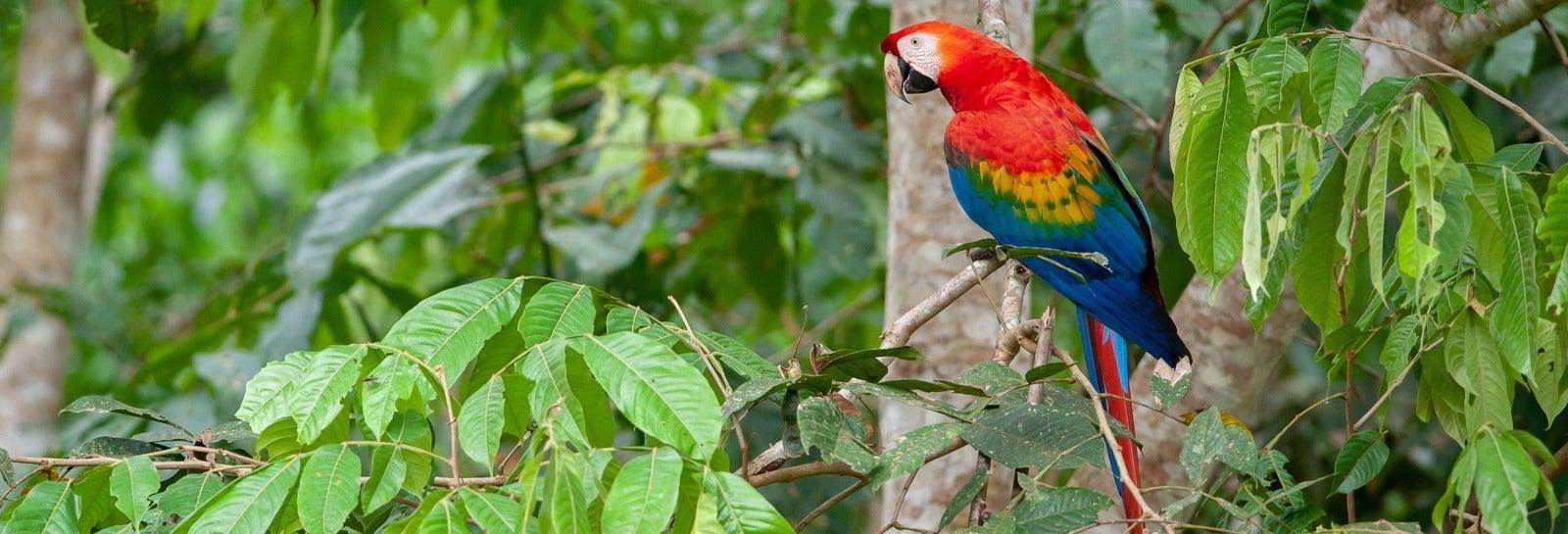 Tour de 3 o 4 días por Tambopata con avistamiento de fauna