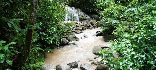 Excursión a la Catarata de Ahuashiyacu