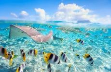 Snorkeling con squali e mante giganti