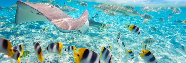 Snorkel con tiburones y rayas