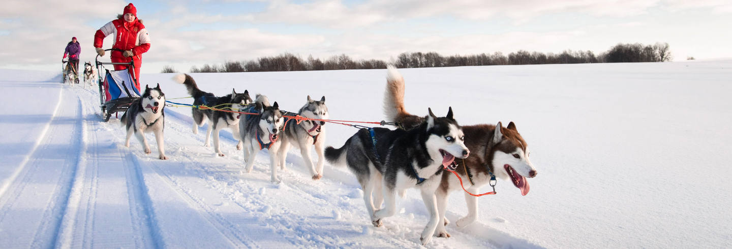 Private Dog Sled Ride
