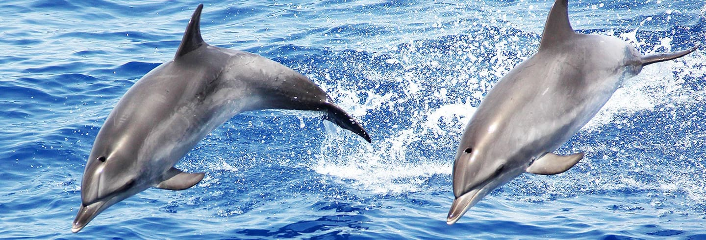 Whale & Dolphin Watching Cruise