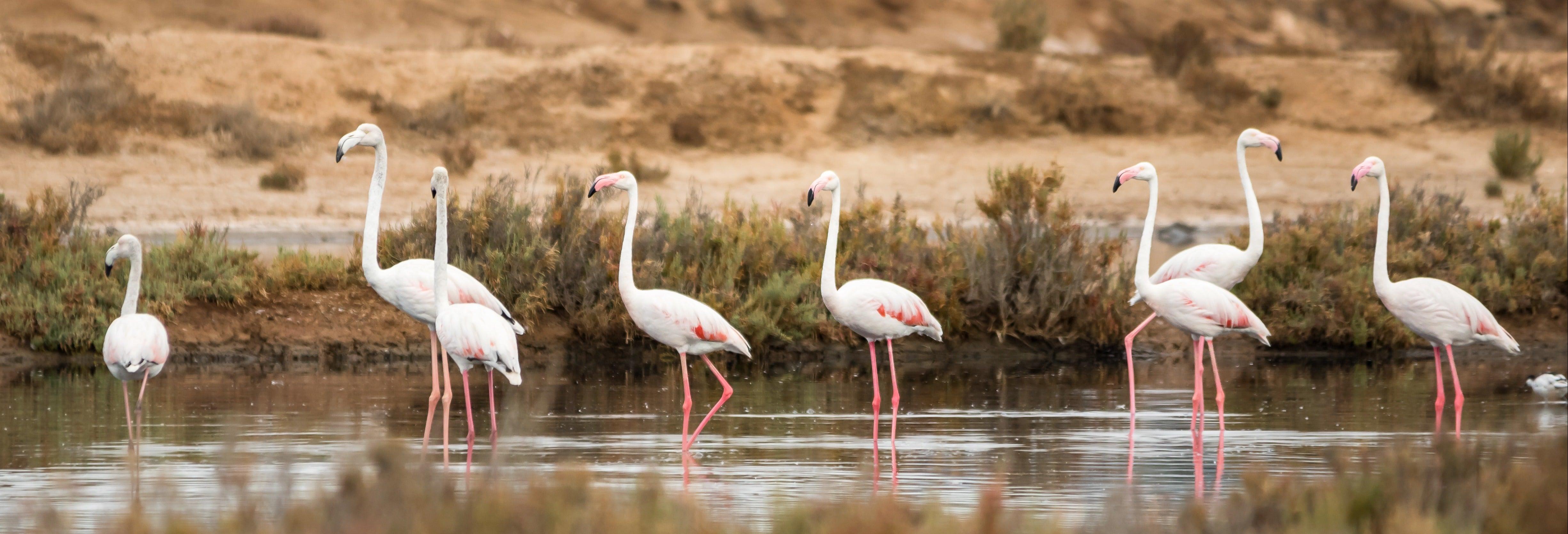 Avistamiento de aves en la Ría Formosa