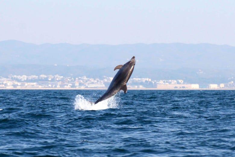 Observation de dauphins à Fuseta