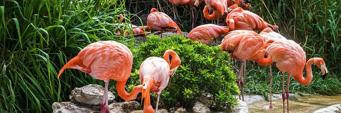 Jardin zoologique de Lisbonne