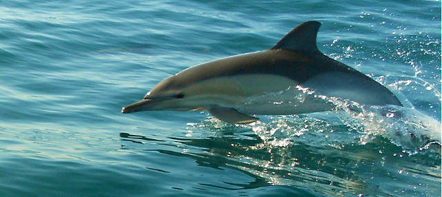 Avistamiento de delfines en Olhao