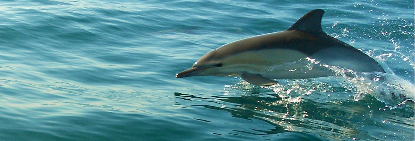 Dolphin Watching in Olhao