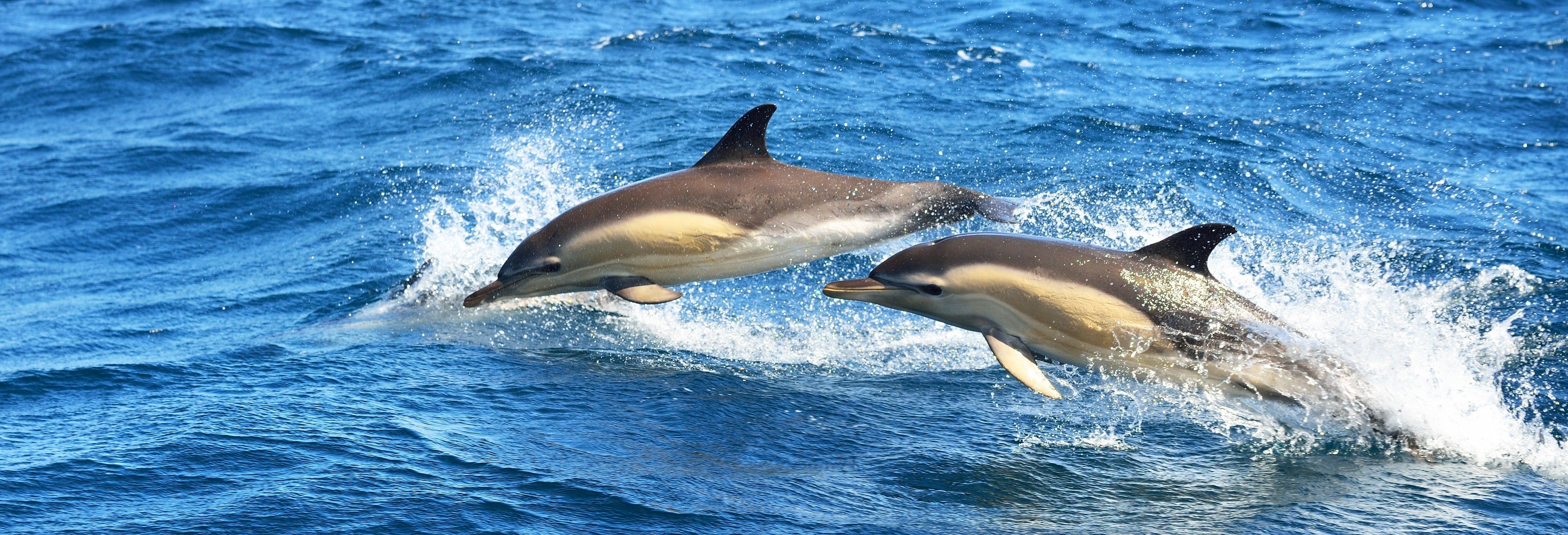 Avistamento de golfinhos em Olhão