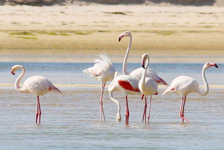 Observation d'oiseaux de la Ría Formosa