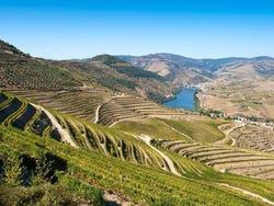 ,Excursión a Valle del Duero,Excursion to Douro Valley,Sólo tour