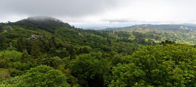 Trilha pelo Parque Natural Sintra-Cascais